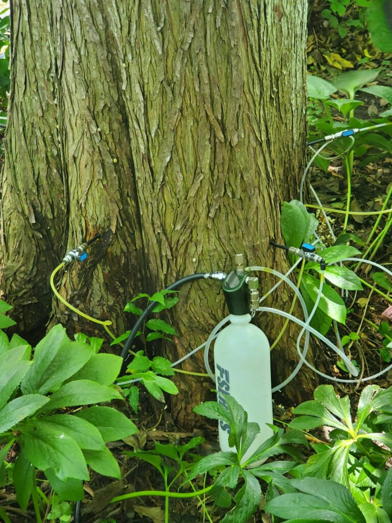 Injecting a tree for greater health